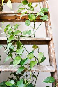 lättsköttaväxter-2