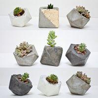 succulenter.jpg